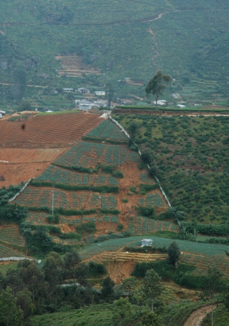 Photo - From poor tea to poorer chemical agriculture